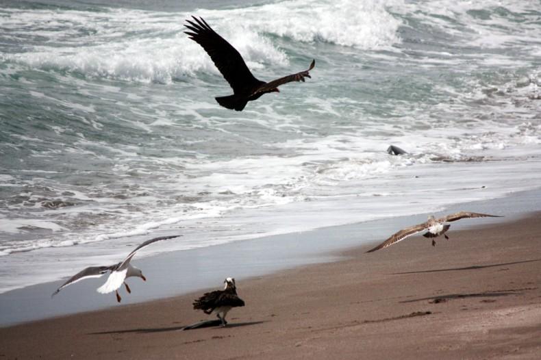 Fight for the Fish Baja California