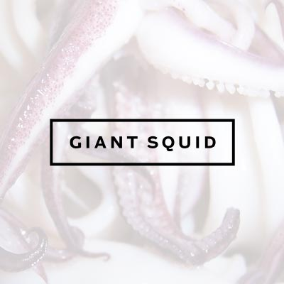 giant-squid-thumb